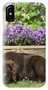 Chocolate Labrador Puppy IPhone Case