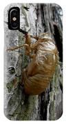 Cicada Bug Shell Nc Usa 2013 IPhone X Case
