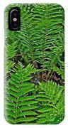 Cinnamon Ferns Along Skyline Trail In Cape Breton Highlands Np-n IPhone Case