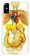 Circulatory System IPhone Case