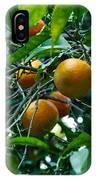 Citrus Sinensis IPhone Case