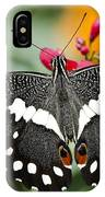 Citrus Swallowtail Butterfly  IPhone Case