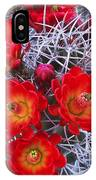 Claretcup Cactus In Bloom Wildflowers IPhone Case