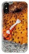 Cleaner Shrimp On Sea Cucumber IPhone Case