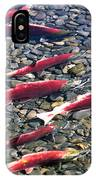 Close-up Of Fish In Water, Sockeye IPhone Case