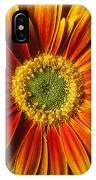 Close Up Yellow Orange Mum IPhone Case
