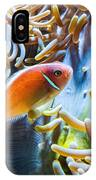 Clown Fish - Anemonefish Swimming Along A Large Anemone Amphiprion IPhone Case