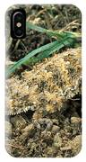 Coast Horned Lizard IPhone Case