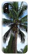 Coconut Palm Tree IPhone Case
