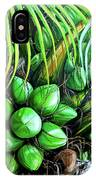 Coconut Tree   Sold IPhone Case