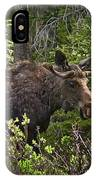 Colorado Moose IPhone Case