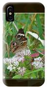 Common Buckeye Butterfly - Junonia Coenia IPhone Case