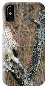 Coopers Hawk 0741 IPhone Case