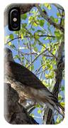 Cooper's Hawk In A Cottonwood IPhone Case