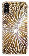 Coral Closeup IPhone Case