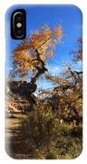 Cottonwoods In Buckhorn Wash 4059 IPhone Case