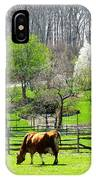 Cow Grazing In Pasture In Spring IPhone Case