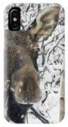 Cow Moose Among Snow Covered Trees In IPhone Case