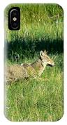 Coyote In Boulder Higlands IPhone Case