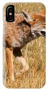 Coyote In Rocky Mountain National Park IPhone Case