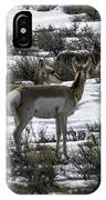 Coyote On Watch IPhone Case