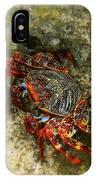 Crab In Cozumel IPhone Case