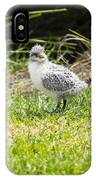 Crested Tern Chick - Montague Island - Australia IPhone Case