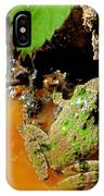 Cricket Frog IPhone Case