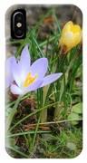 Crocuses In Bloom IPhone Case