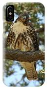 Curious Redtail IPhone Case