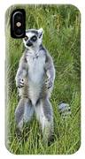 Curious Ring-tail IPhone Case