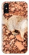 Curious Squirrel 2 IPhone Case