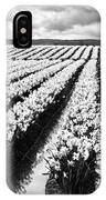 Daffodil Fields II IPhone Case