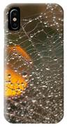 Dandelion With Droplets Close-up IPhone Case