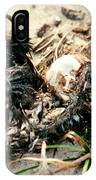Decomposing Dead Bird IPhone Case