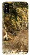 Deer In The Rockies IPhone Case