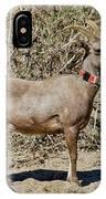 Desert Bighorn Sheep Ewe With Radio IPhone Case