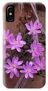 Desert Chicory Rafinesquia Neomexicana IPhone Case