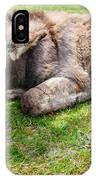 Donkey On Grass IPhone Case