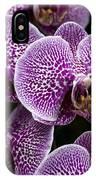 Doritaenopsis Leopard Prince 2651 IPhone Case