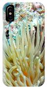 Double Giant Anemone And Arrow Crab IPhone Case