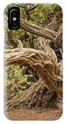 Dragon Tree IPhone Case