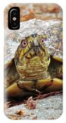 Eastern Box Turtle IPhone Case