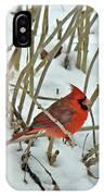 Eastern Cardinal - Cardinalis Cardinalis IPhone Case
