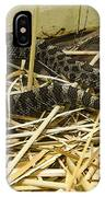 Eastern Massasauga Rattlesnake Sistrurus Catenatus Poster Look IPhone Case