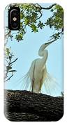 Egret Waiting For Mating  IPhone Case