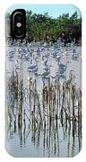 149838-egrets Feeding, Everglades Nat Park  IPhone Case