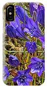 Elegant Brodiaea In Tilden Regional Park-california   IPhone Case