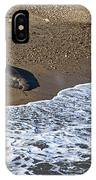 Elephant Seal Sunning On Beach IPhone Case