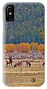 Elk Near Cub Lake Trail In Rocky Mountain National Park-colorado  IPhone Case